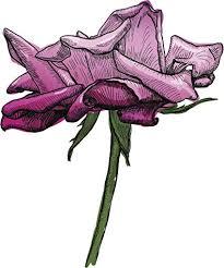 com purple ombre wilted flower pen illustration symbol