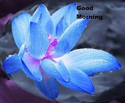 good morning images flowers blue lotus images