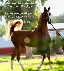 خلفيات خيول مكتوب عليها شعر صور خيول بها اشعار و حكم حنين الذكريات