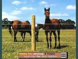 Fencing For Horses Fences Ideas Suites For Pets Youtube