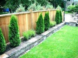 Shrubs To Plant Along Fence Best Plants For Fence Line Trees To Plant Along Fence Privacy Trees A Small Backyard Landscaping Small Garden Fence Backyard Fences