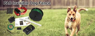 Nz S Best E Collars Gps Dog Tracking Dog Training Dog Fencing Collars