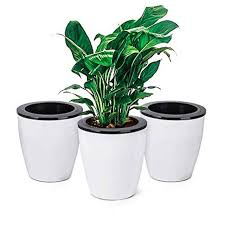 the 8 best self watering planters of 2020