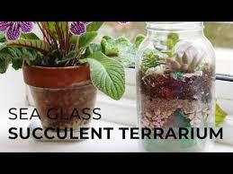 diy sea glass succulent terrarium you