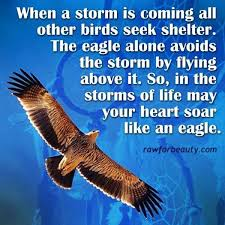 Words of wisdom | Raw for beauty, Eagle, Eagles