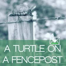 If You See A Turtle On A Fence Post Its Destiny Catering Facebook