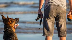 Dog Parks And Beaches Near Brisbane Visit Moreton Bay Region