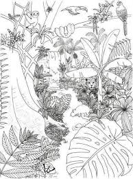 Rainforest Animals And Plants Coloring Page In 2020 Regenwald