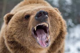 Does Pepper Spray Actually Work Against Bears?   Time
