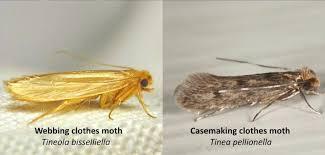 moth damage restoration fuzzy wuzzy