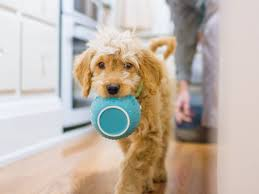 how to prepare homemade puppy food