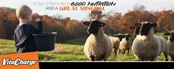 beatty club lambs emphasizes basic