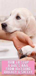 how to stop a dog s nail from bleeding