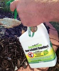 At The Home Depot Pest Control Pests Insect Control