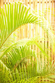 Closeup Of Palm Leaves And Bamboo Fence Stock Photo Download Image Now Istock