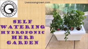 easy hydroponics counter top herb