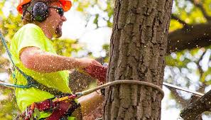 The Perks of Hiring Professional Tree Removal Services – Snapp