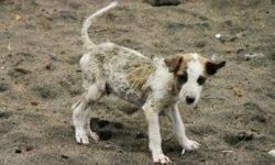 dog skin coat disorders healthy
