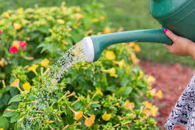 Image result for homescape gardening