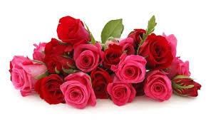 foto dan gambar bunga cantik untuk laptop mawar