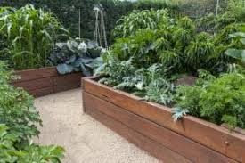 vegetable gardens veggie garden ideas
