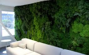 living walls vs preserved moss