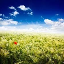 hd beautiful natural scenery free stock