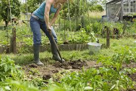 5 steps to start a new garden from scratch