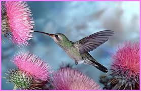 Amazon Com Hummingbird Pink Powderpuff Flowers Etched Vinyl Stained Glass Film Static Cling Window Decal Home Kitchen