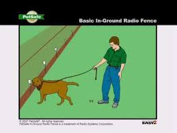 Petsafe How To Train Your Dog On The In Ground Radio Fence Youtube