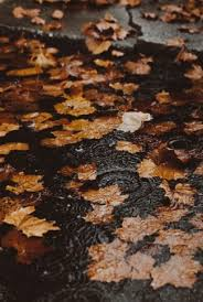 fallen leaves and water ripples
