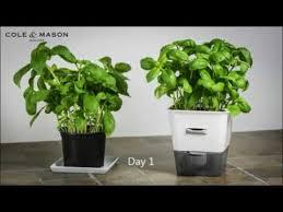 cole mason single potted herb keeper