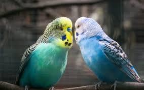 Bird Articles | Frendy Pets