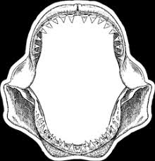 Great White Shark Jaws Sticker