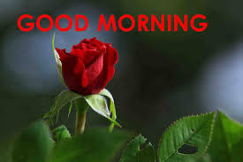 top 70 good morning images greetings