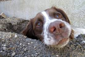 How To Stop A Dog From Digging Under A Fence Doggytastic
