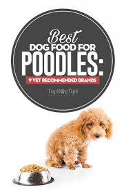 best dog food for poodles all sizes