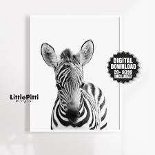 Cute Baby Zebra Kids Room Safari Animal Print Zebra Print Etsy