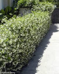 Star Jasmine Inland Valley Garden Planner