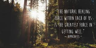 hippocrates healing quote image the natural healing force in