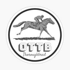 Off The Track Thoroughbred Sticker By Kbeach24 Redbubble