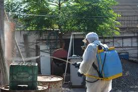 Ya hay 15 casos de dengue: aumentan los pedidos de fumigaciones ...
