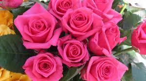 صور زهور جميلة 2020 صور ورود جميلة وازهار ورود رومانسية صور خلفيات