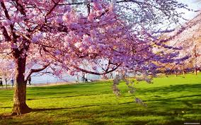 Spring Is Here Pictures | Amazing Wallpapers