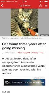 O Vodafone P 4G 1231 87% Top Stories E Adele Bailey Ollie Is Pictured  Playing With His Favourite Toy Again Cat Found Three Years After Going  Missing 21 Hours Ago NE Scotland