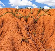 what is clay soil with pictures