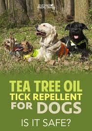 tea tree oil dog spray recipe for fleas