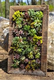beautiful vertical succulents garden