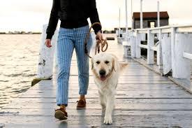 dog friendly newport ri find pet