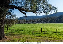 Lush Green Meadow Farm Outside Marysville Nature Stock Image 1153469644